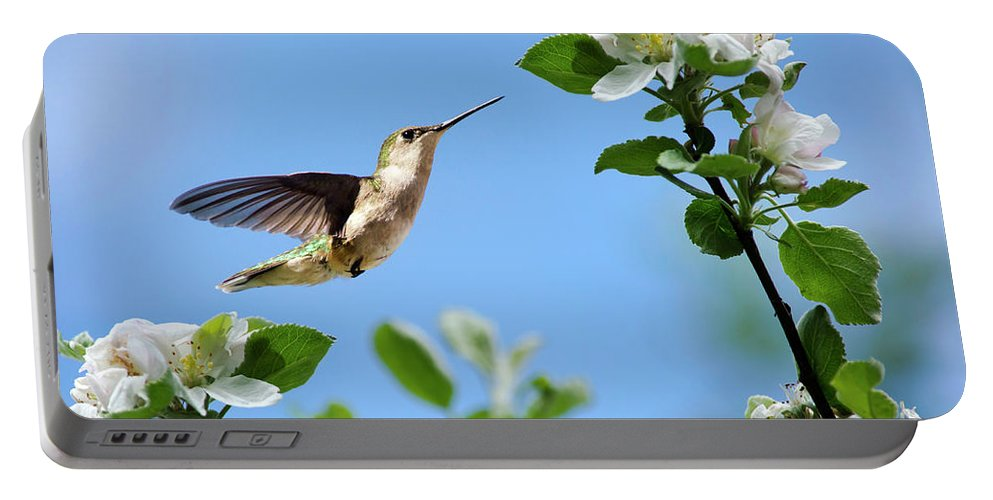 Hummingbird Portable Battery Charger featuring the photograph Hummingbird Springtime by Christina Rollo