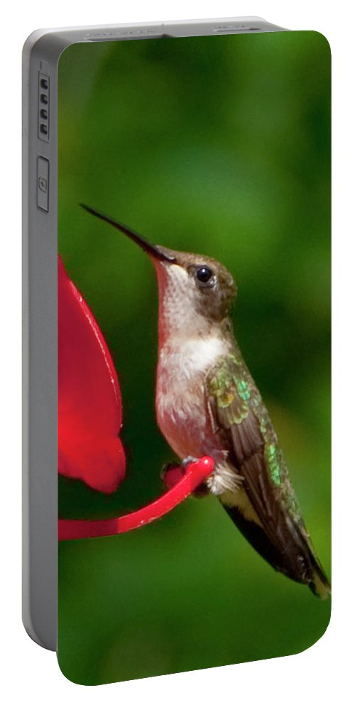 Photography Portable Battery Charger featuring the photograph Hummingbird by Steven Natanson
