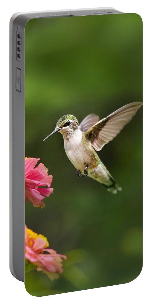 Bird Portable Battery Charger featuring the photograph Hummingbird Sunrise by Christina Rollo