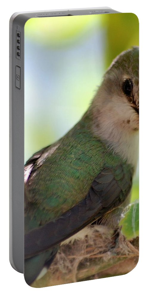 Hummingbird Portable Battery Charger featuring the photograph Hummingbird With Small Nest by Amy Fose