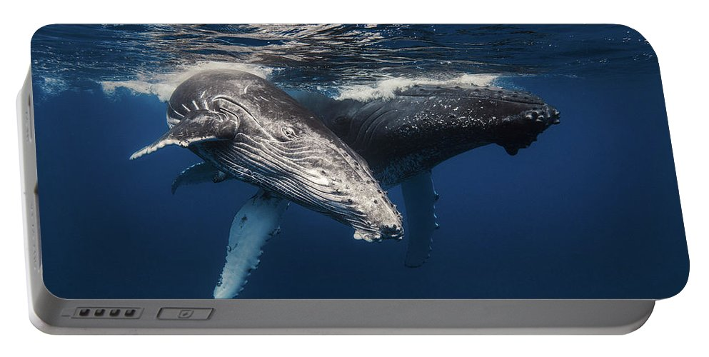 Baleine � Bosses Portable Battery Charger featuring the photograph Humpback Whale And Calf by BARATHIEU Gabriel