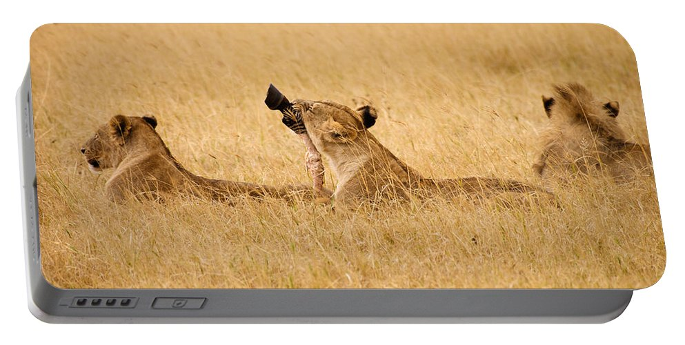 3scape Photos Portable Battery Charger featuring the photograph Hungry Lions by Adam Romanowicz