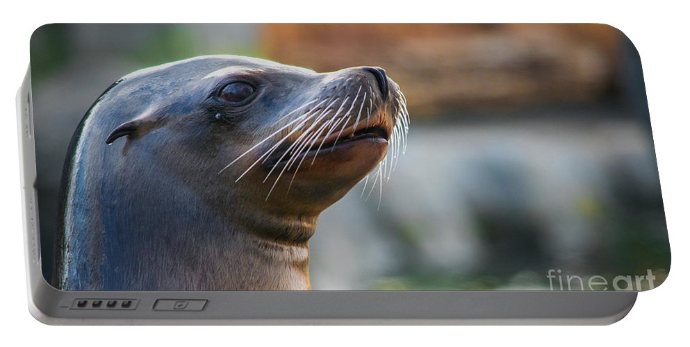 Mammal Portable Battery Charger featuring the photograph Sea Lion by Robert Edgar