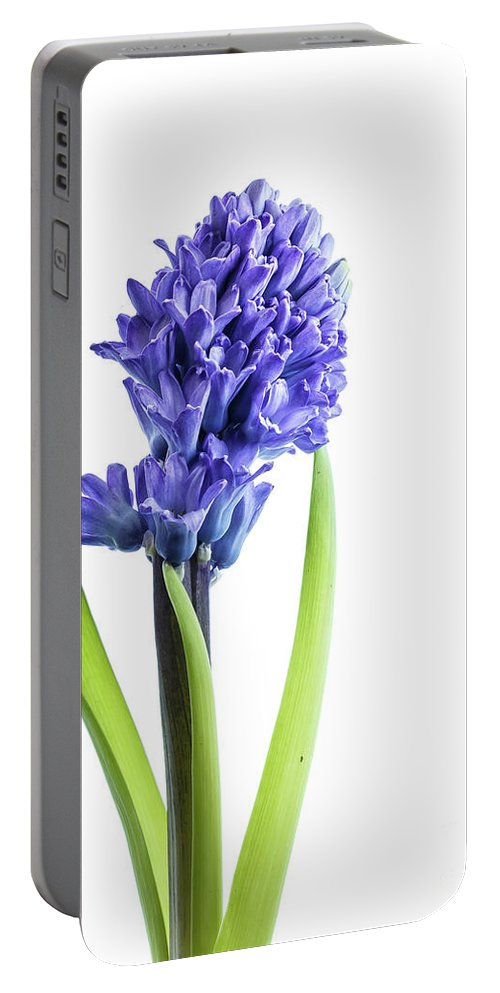 Purple Portable Battery Charger featuring the photograph Hyacinth by Kelly Merlini