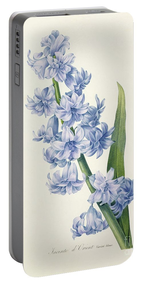 Hyacinthus Portable Battery Charger featuring the drawing Hyacinth by Pierre Joseph Redoute