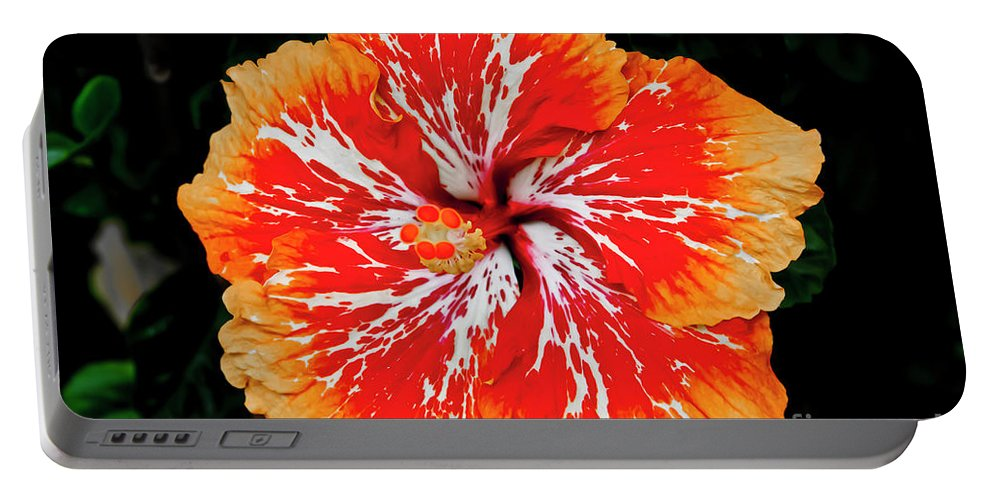 Flower Portable Battery Charger featuring the photograph Hybrid Hibiscus II Maui Hawaii by Jim Cazel