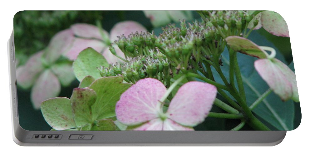 Hydrangea Portable Battery Charger featuring the photograph Hydrangea by Amanda Barcon
