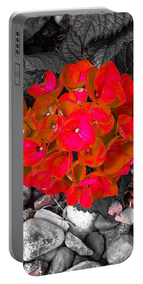 Hydrangea Portable Battery Charger featuring the photograph Hydrangea In Carmine by Jennifer Kohler