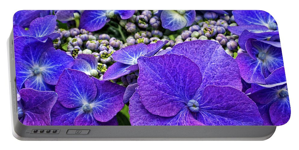 Hydrangea Macrophylla Teller Portable Battery Charger featuring the photograph Hydrangea Plant by Kevin Richardson
