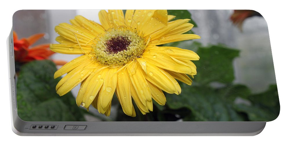Flower Portable Battery Charger featuring the photograph I Am Sorry by Munir Alawi