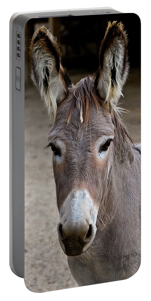 Donkey Portable Battery Charger featuring the photograph I Assked You A Question by DigiArt Diaries by Vicky B Fuller