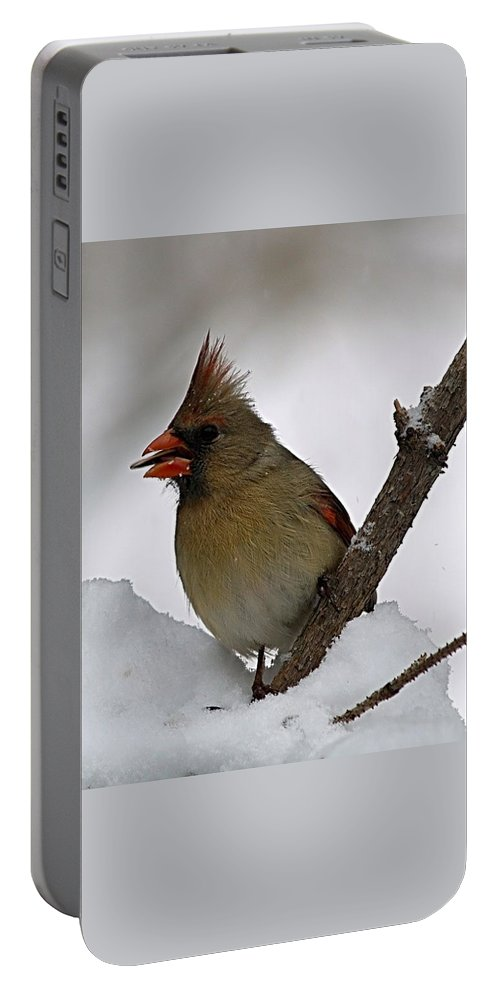 Bird Portable Battery Charger featuring the photograph I Love Seeds by Gaby Swanson