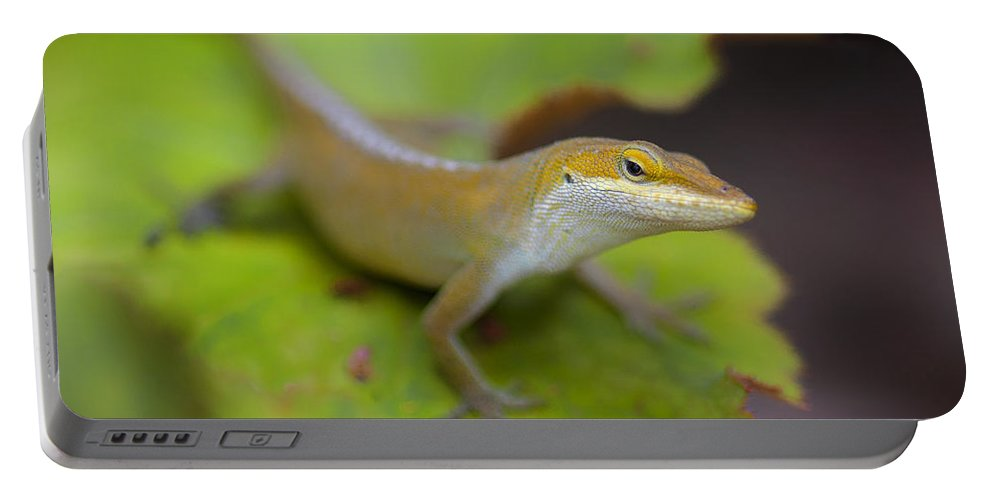 Botanical Gardens Lizard Animals Reptile Insects Leafy Leaf Plants Flowers Portable Battery Charger featuring the photograph Lloyd's Lookin' At You by Scott Rogers