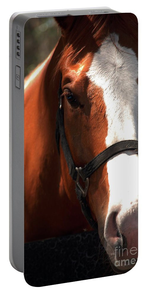 Horse Portable Battery Charger featuring the photograph I Was Waiting For You by Susanne Van Hulst