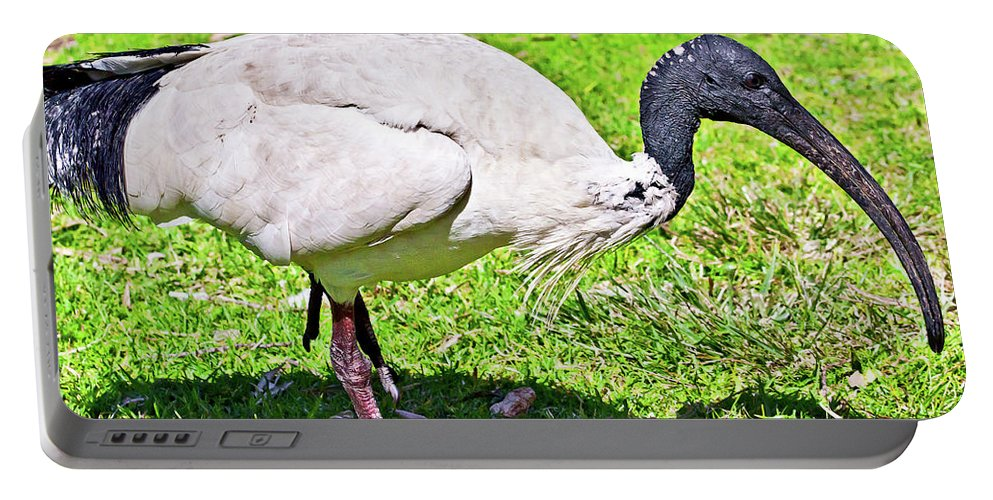 White Portable Battery Charger featuring the photograph Ibis Looking For Food by Miroslava Jurcik