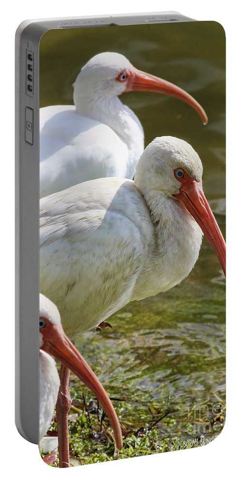 Portable Battery Charger featuring the photograph Ibis Three by Deborah Benoit