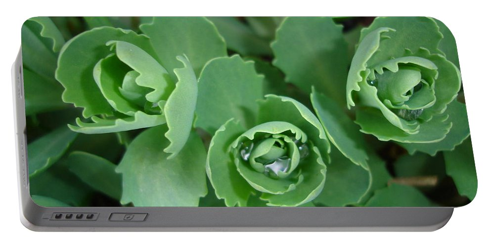 Green Portable Battery Charger featuring the photograph Ice Plant by Susan Baker