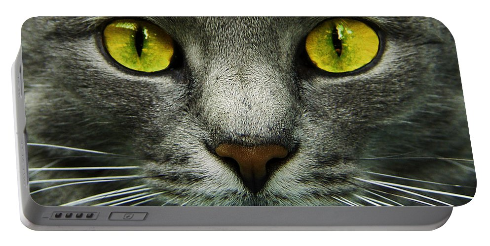 Cats Portable Battery Charger featuring the photograph I.c.u. by Joachim G Pinkawa