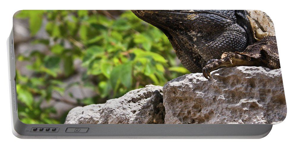 Iguana Portable Battery Charger featuring the photograph Iguana At Talum Ruins Mexico 2 by Douglas Barnett