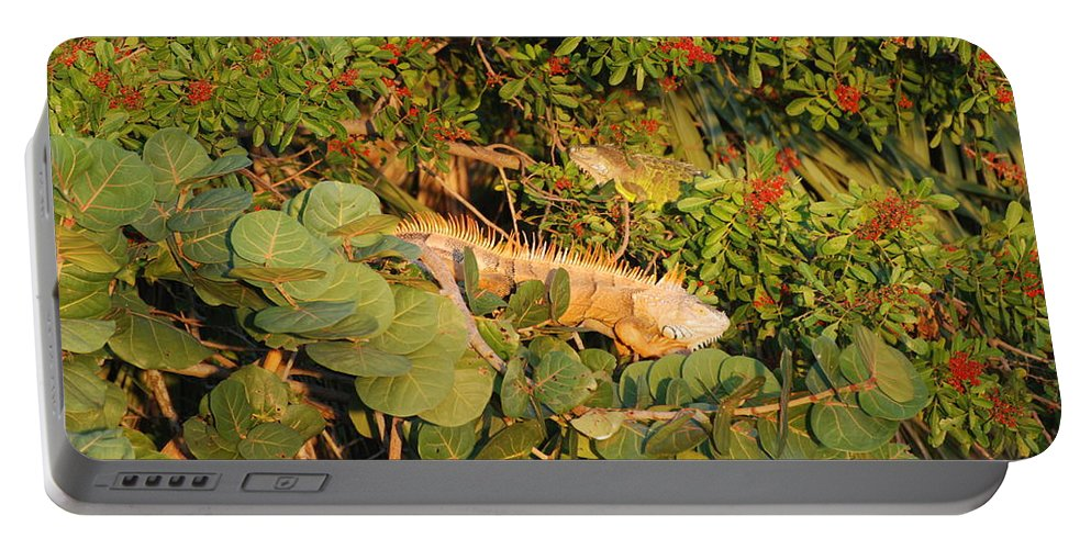Sunset Portable Battery Charger featuring the photograph Iguanas by Rob Hans