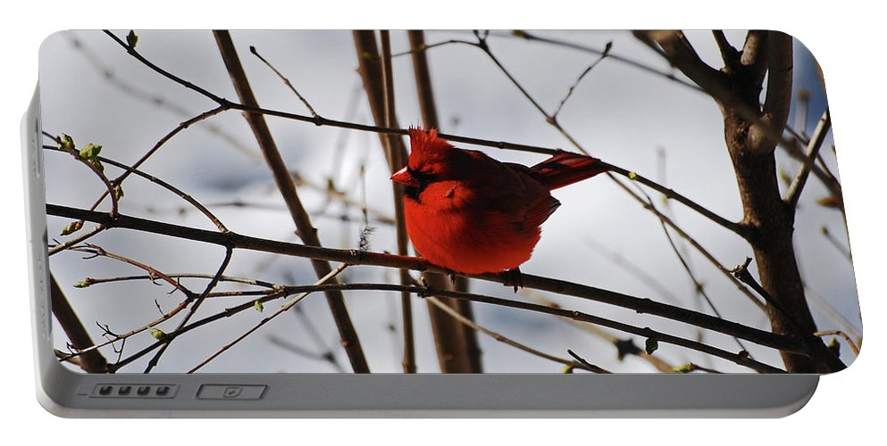 Cardinal Portable Battery Charger featuring the photograph I'm Feeling Rather Red Today by Lori Tambakis