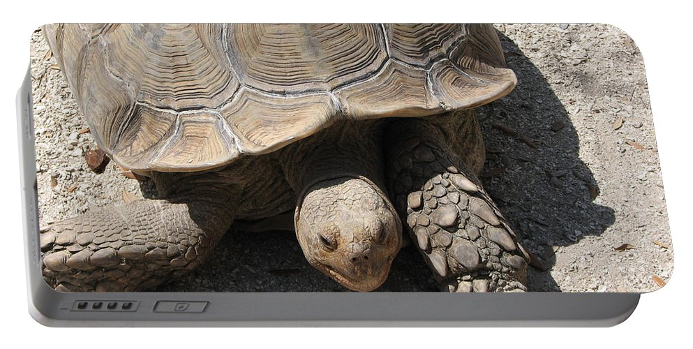 Turtle Portable Battery Charger featuring the photograph Im Moving by Stacey May