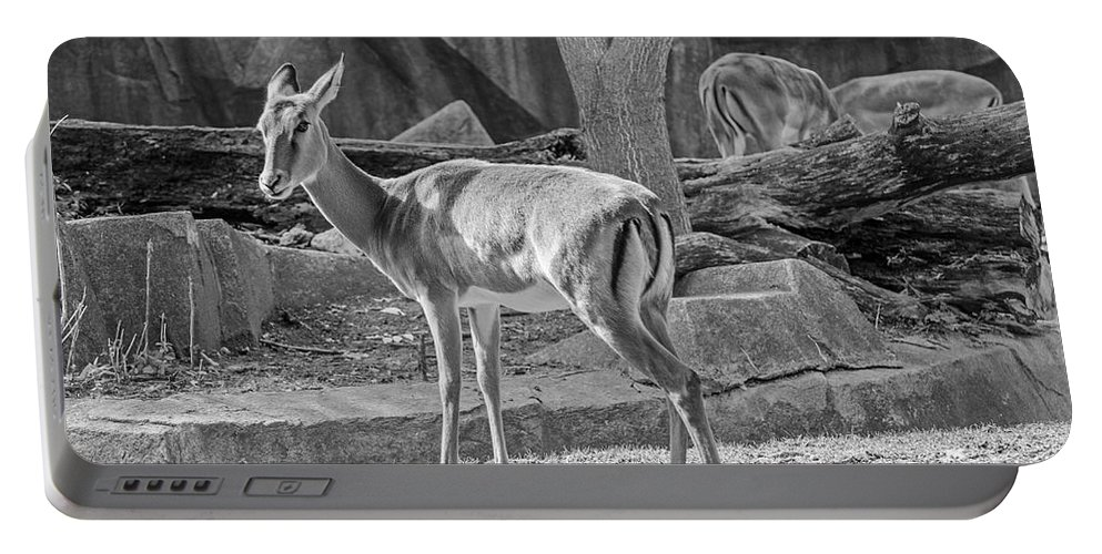 Impala Portable Battery Charger featuring the photograph Impala  Black And White by Susan McMenamin