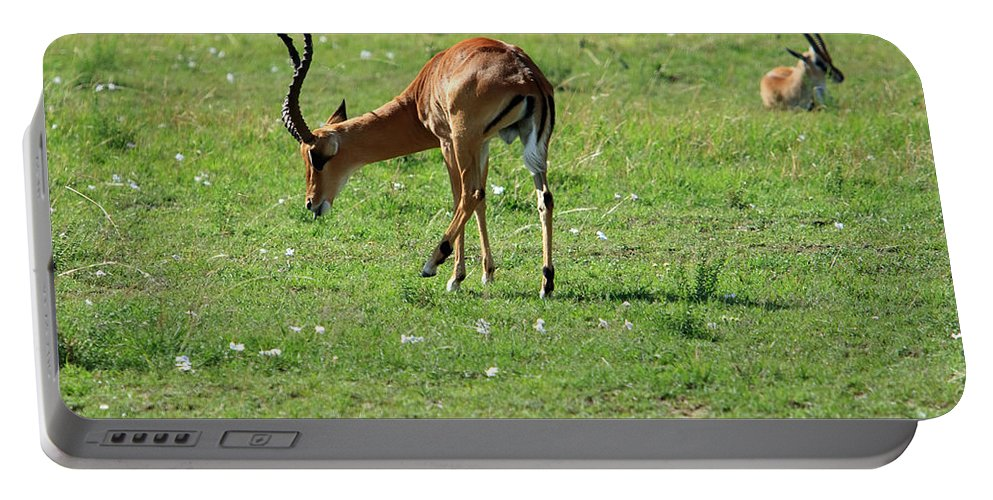 Deer Portable Battery Charger featuring the photograph Impala Buck by Aidan Moran