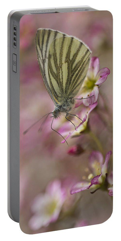 Insect Portable Battery Charger featuring the photograph Impression With A Small Butterfly by Jaroslaw Blaminsky