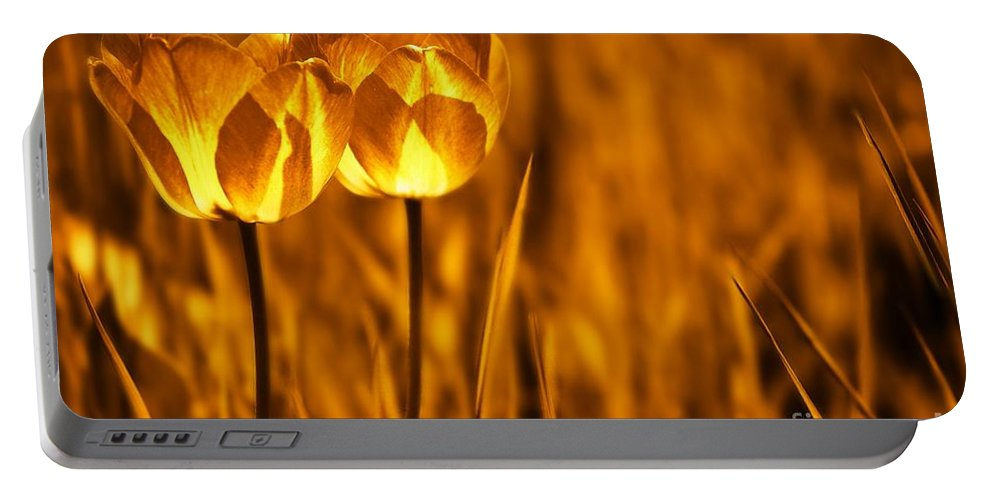 Tulips Portable Battery Charger featuring the photograph In A Perfect World by Jacky Gerritsen