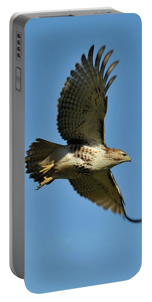 Hawk Portable Battery Charger featuring the photograph In Flight by David Arment