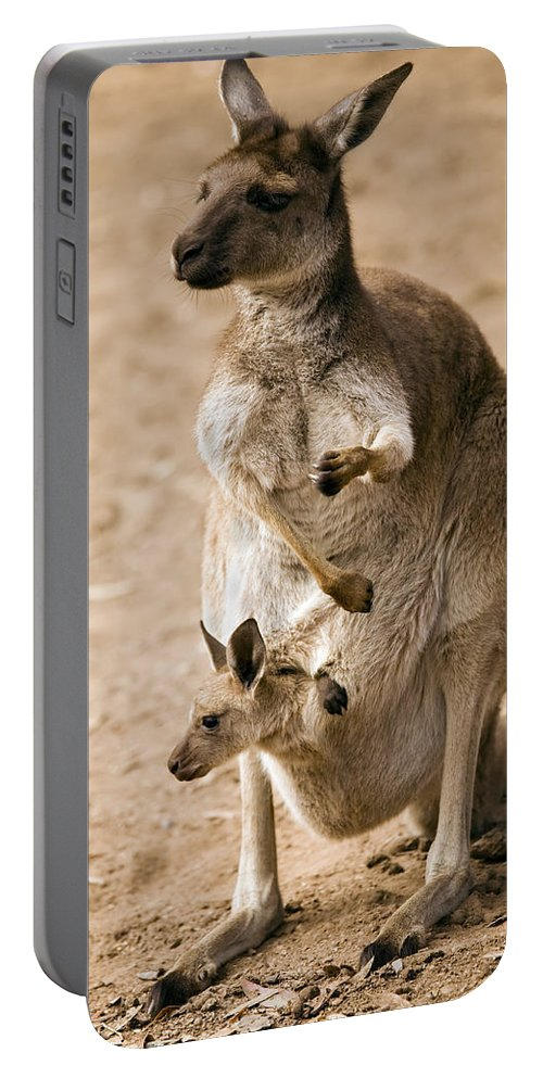 Kangaroo Portable Battery Charger featuring the photograph In Mother's Care by Mike Dawson
