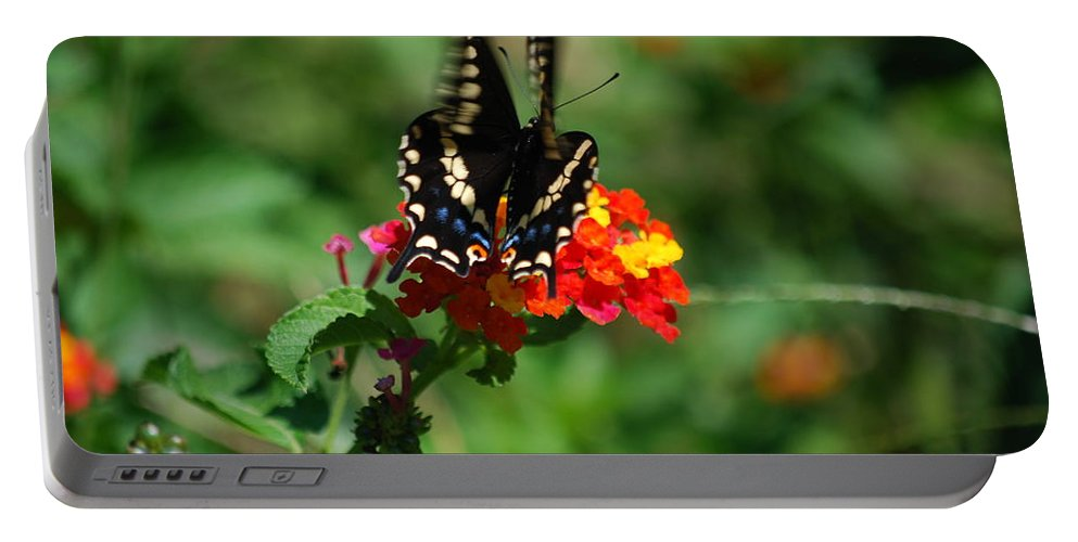 Swallowtail Portable Battery Charger featuring the photograph In Motion by Lori Tambakis