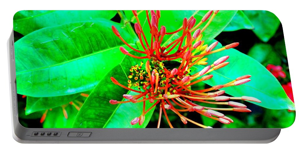 Flower Portable Battery Charger featuring the photograph In My Garden by Ian MacDonald