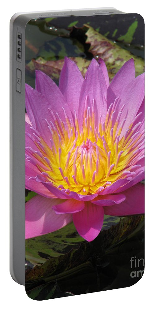 Lotus Portable Battery Charger featuring the photograph In Position by Amanda Barcon