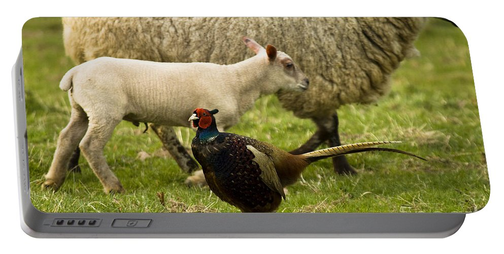 Pheasant Portable Battery Charger featuring the photograph In The Countryside by Angel Ciesniarska
