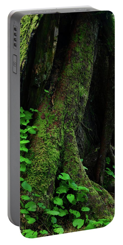 Oregon Portable Battery Charger featuring the photograph In The Crevice Of A Giant by Renee Hong