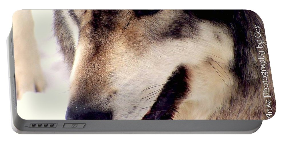 Eyes Portable Battery Charger featuring the photograph In The Eyes Of The Wolves by Charlene Cox
