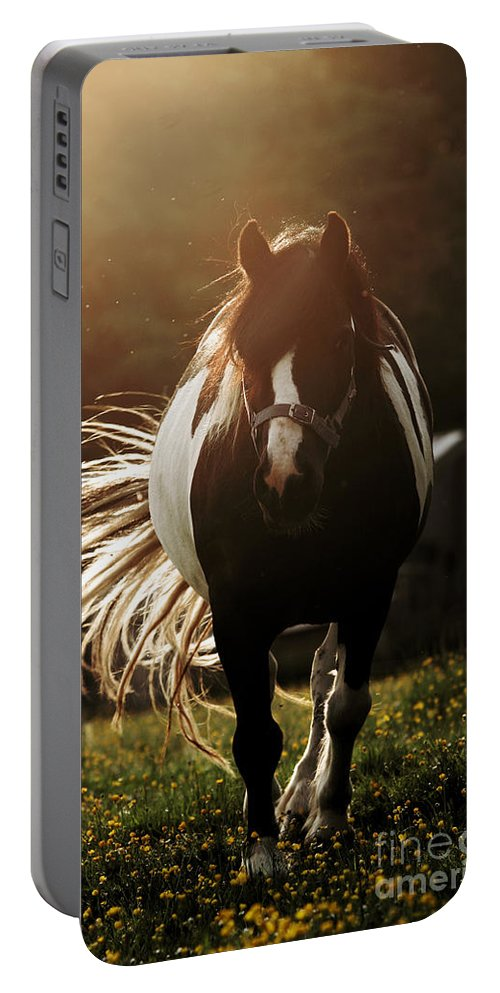Horse Portable Battery Charger featuring the photograph In The Last Rays Of Setting Sun by Angel Ciesniarska