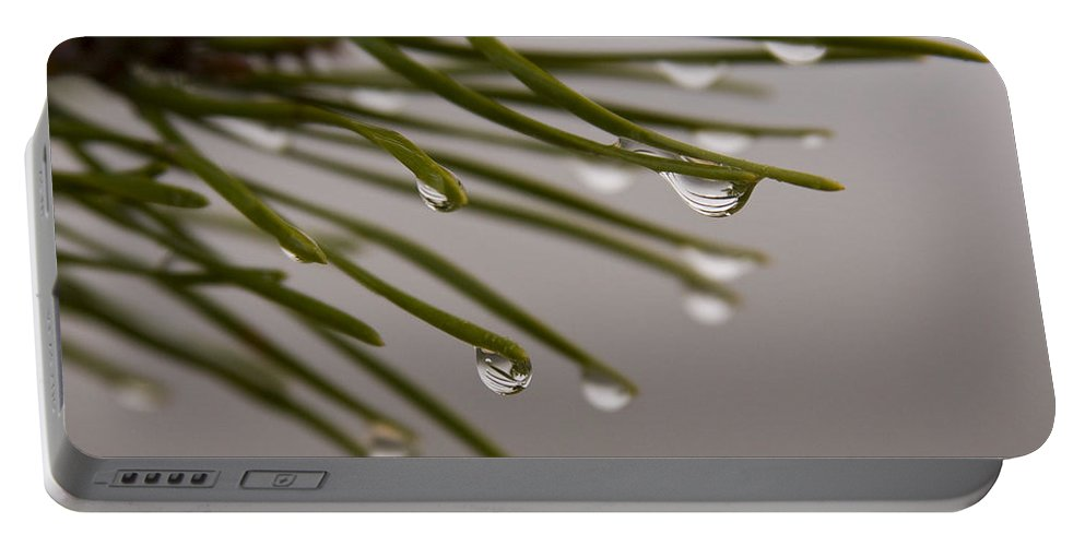 Pine Tree Needle Drop Droplet Reflection Rain Green Fog Foggy Nature Outdoors Hike Portable Battery Charger featuring the photograph In The Rain by Andrei Shliakhau