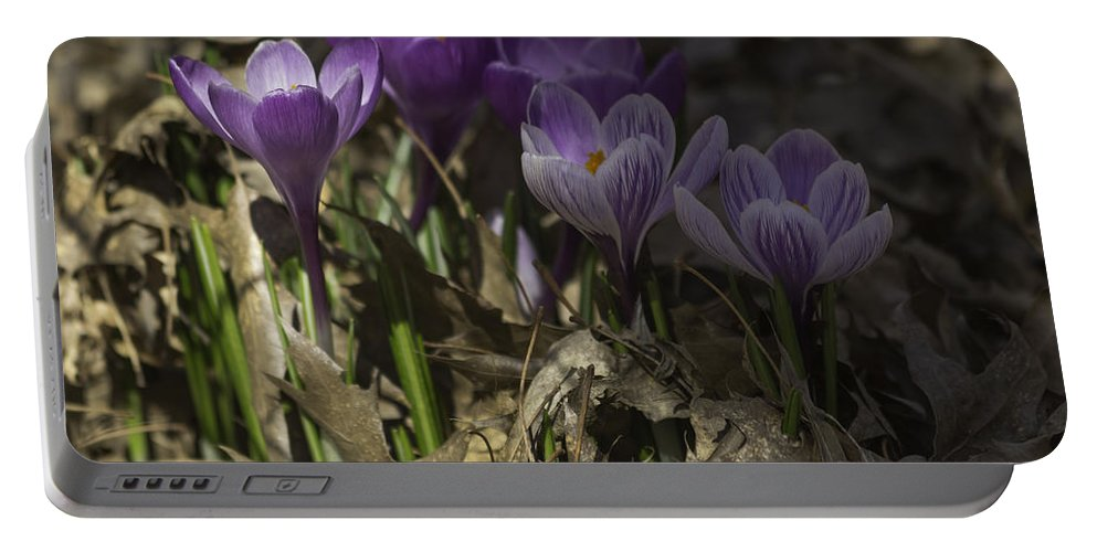 Crocus Portable Battery Charger featuring the photograph In The Shadows by Teresa Mucha