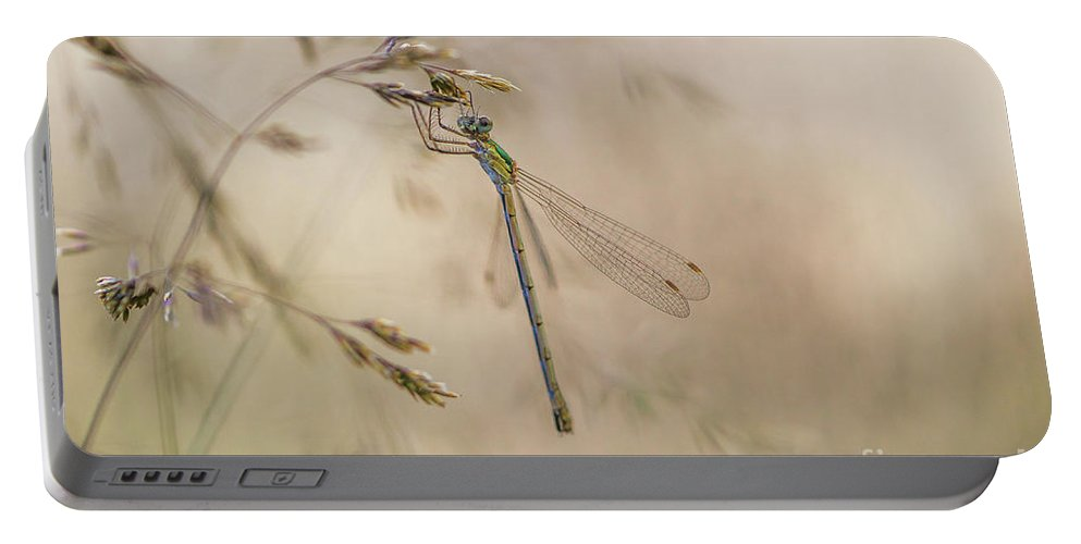 Damselflie Portable Battery Charger featuring the photograph In The Small World by Rikard Strand