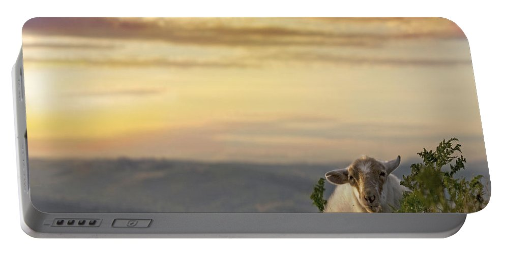 Long Mynd Hill Portable Battery Charger featuring the photograph In The Warm Evening Sunlight by Angel Ciesniarska