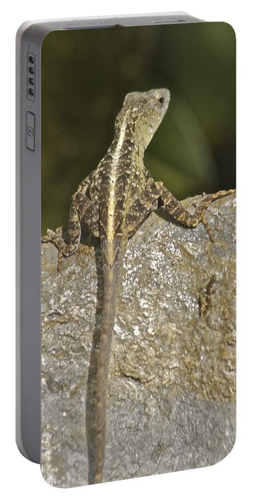 Wildlife Portable Battery Charger featuring the photograph In Thought by Michael Peychich