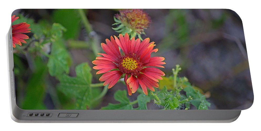 Flower Portable Battery Charger featuring the photograph Indian Blanket Flower by Kenneth Albin