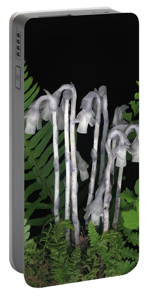 Monotrop Unifolora Portable Battery Charger featuring the photograph Indian Pipe by Sandi F Hutchins