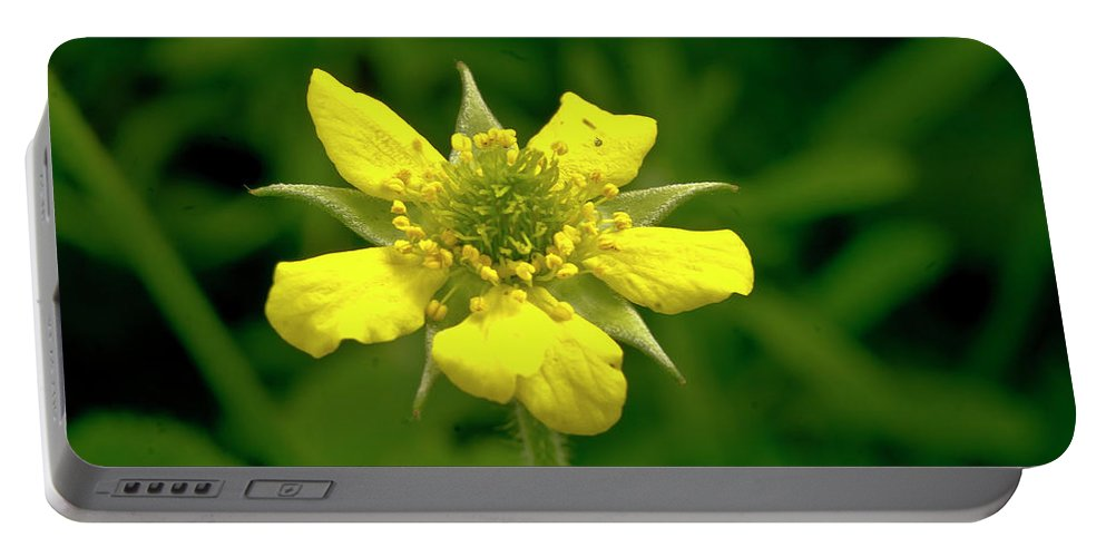 Duchesnea Indica Portable Battery Charger featuring the photograph Indian Strawberry Flower by Elena Perelman