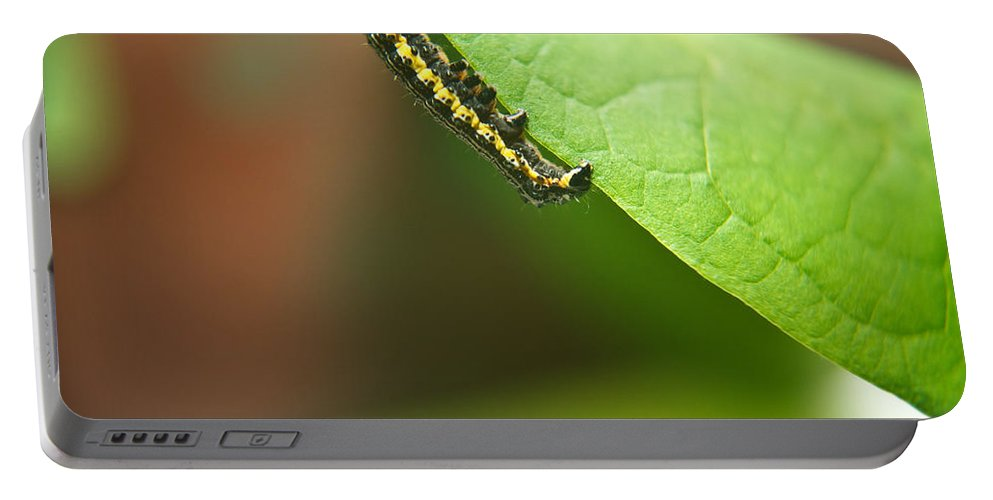 Cove Portable Battery Charger featuring the photograph Insect Larva 2 by Douglas Barnett