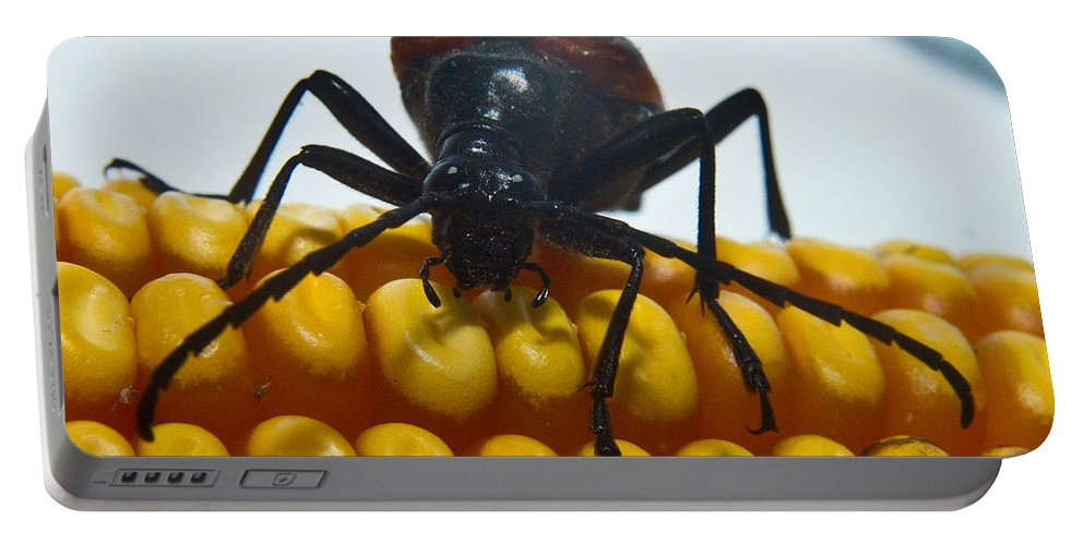 Beetle Portable Battery Charger featuring the photograph Inspecting Beetle by Douglas Barnett
