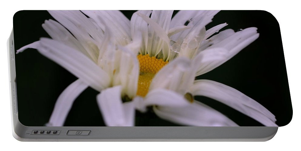 Flower Portable Battery Charger featuring the photograph Intense Daisy by Smilin Eyes Treasures
